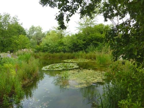 17-festival-waterlily-pond.jpg