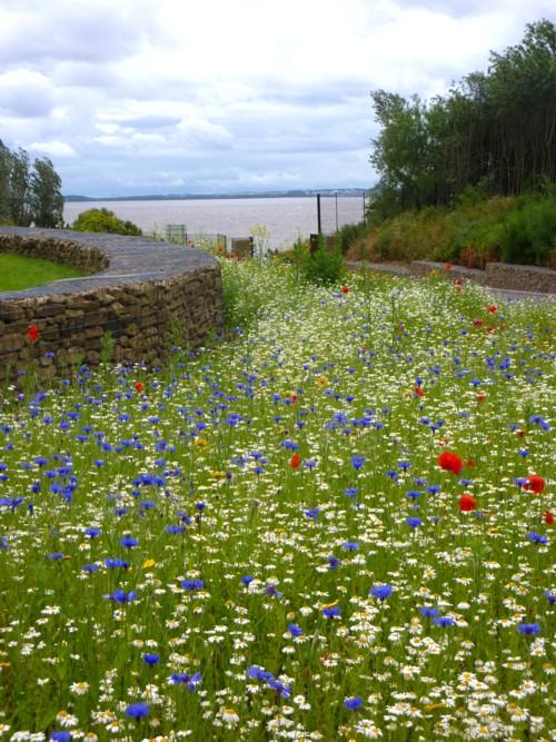 17-festival-wildflowers.jpg