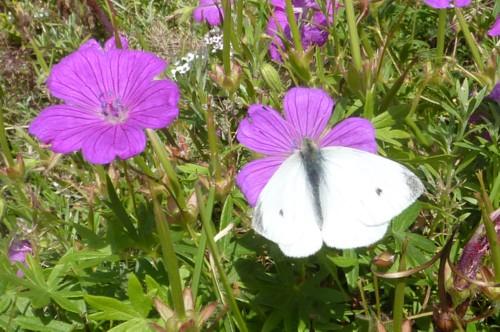 19-crosby-small-white.jpg