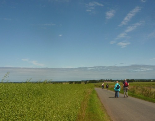 20-gorse-hill-road-and-oats.jpg