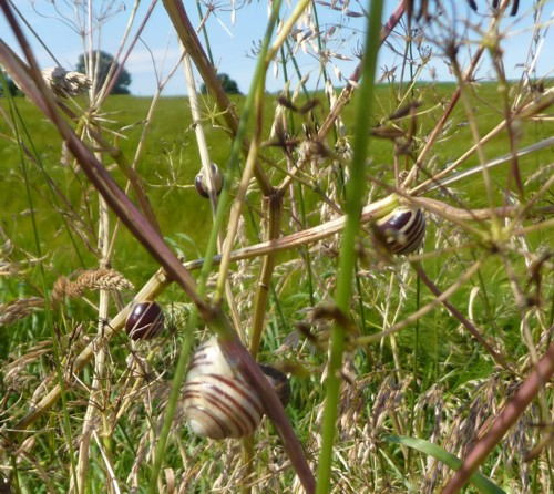 20-gorse-hill-snails.jpg