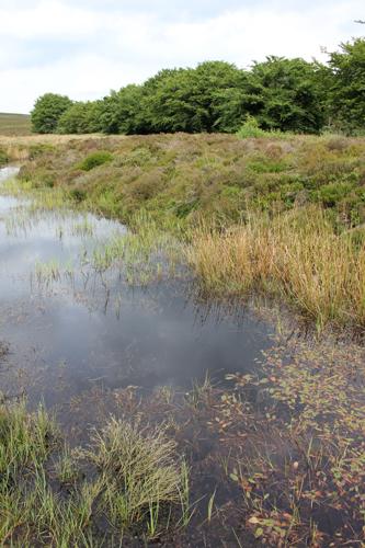 mna-long-mynd-pond1.jpg