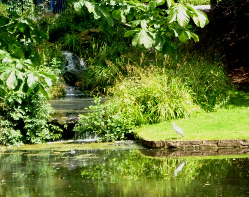22-sefton-park-view-with-heron.jpg