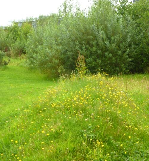 24-garston-golden-mound.jpg