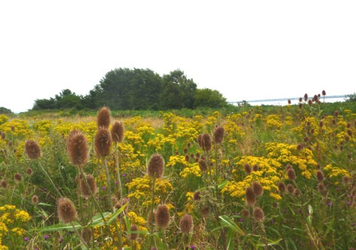 24-garston-view-with-teasels.jpg