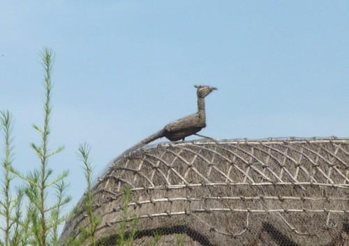 26-churchtown-thatch-pheasant.jpg