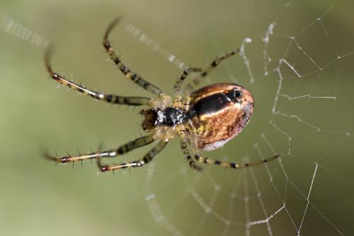 mna-autumn-spider1.jpg