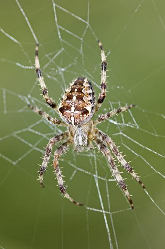 mna-blacktoft-garden-spider1.jpg