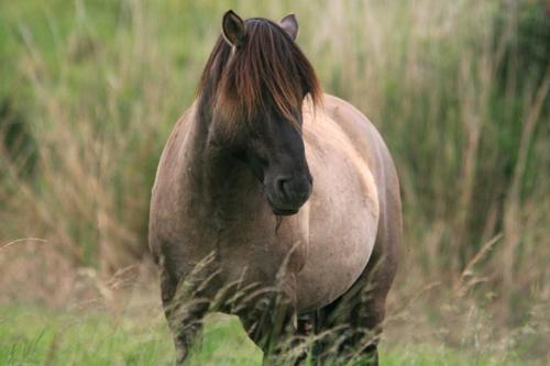 mna-cd-konik-pony.jpg
