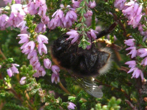 mna-cd-tree-bumblebee.jpg
