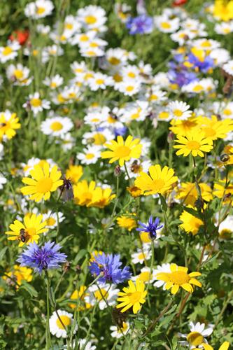 mna-pennington-flash-wildflowers.jpg