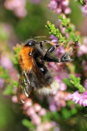 mna-tree-bumblebee.jpg