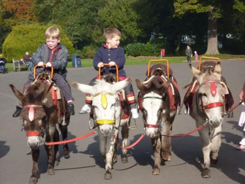 31-croxteth-donkey-rides.jpg
