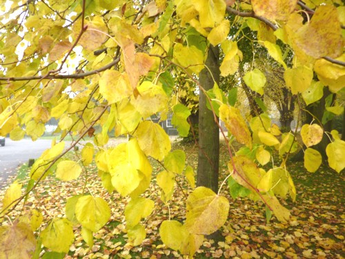 31-croxteth-yellow-leaves.jpg
