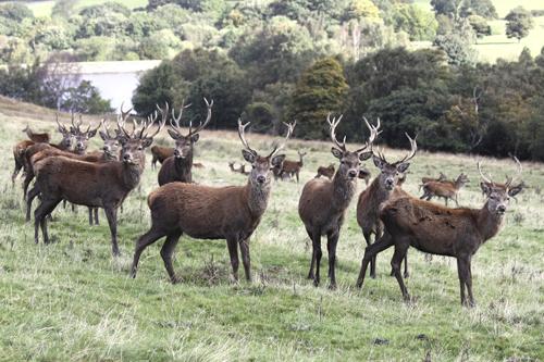 mna-lyme-park-red-deer1.jpg