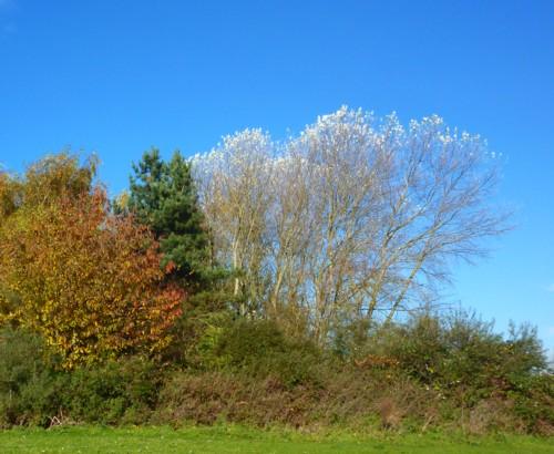 33-pickerings-pasture-white-poplars.jpg