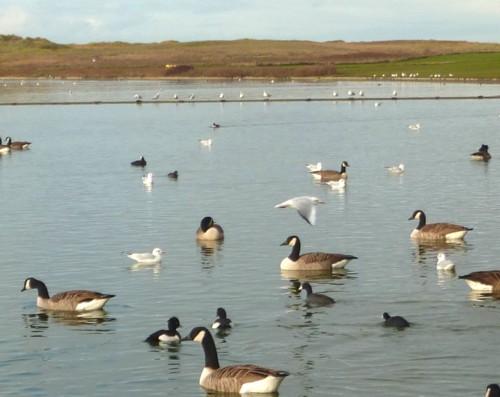 36-waterloo-lake-birds.jpg