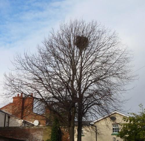 36-waterloo-magpie-nest.jpg