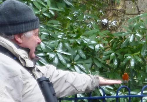 02-sefton-park-feeding-robin.jpg