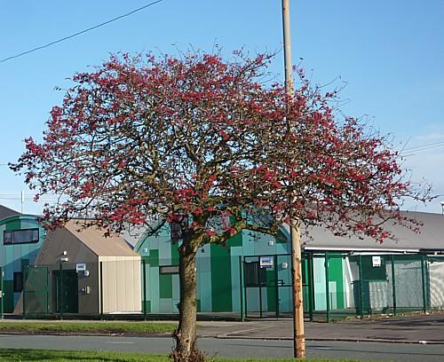 03-townsend-lane-berry-tree.jpg