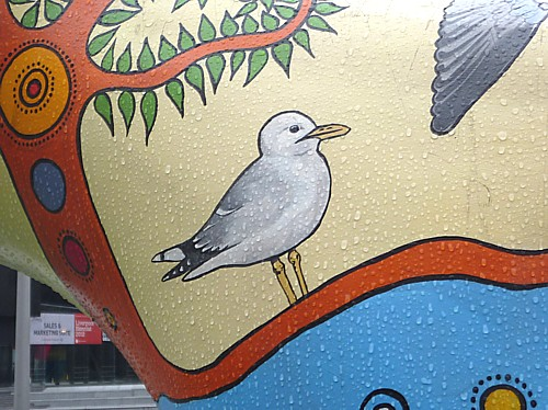 05-museum-common-gull.jpg
