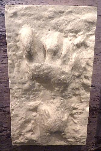 05-museum-formby-footprint.jpg