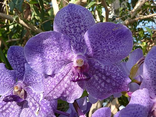 06-orchid.jpg