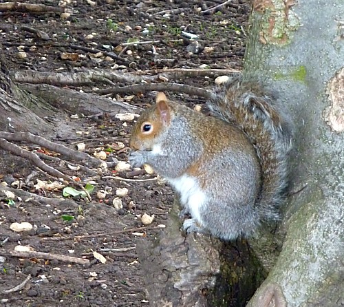 07-stanley-squirrel.jpg
