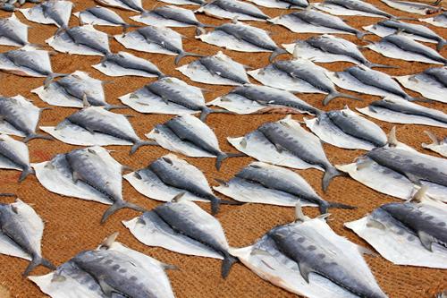 mna-negombo-fish-market1.jpg