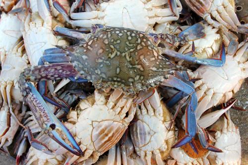 mna-negombo-fish-market3.jpg