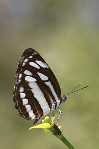 mna-sri-lanka-butterfly2.jpg