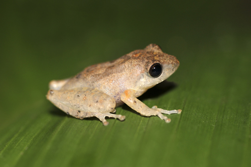 mna-sri-lanka-frog1.jpg