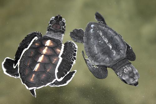 mna-sri-lanka-turtles2.jpg