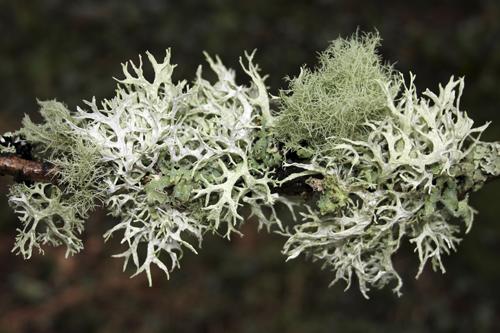 mna-vyrnwy-lichen1.jpg