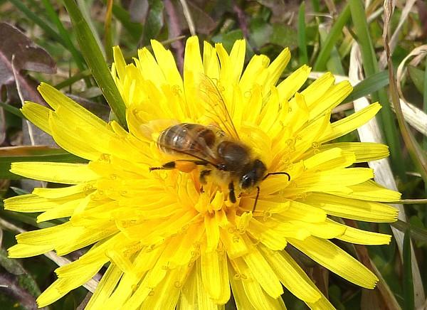 14 Thornton H bee