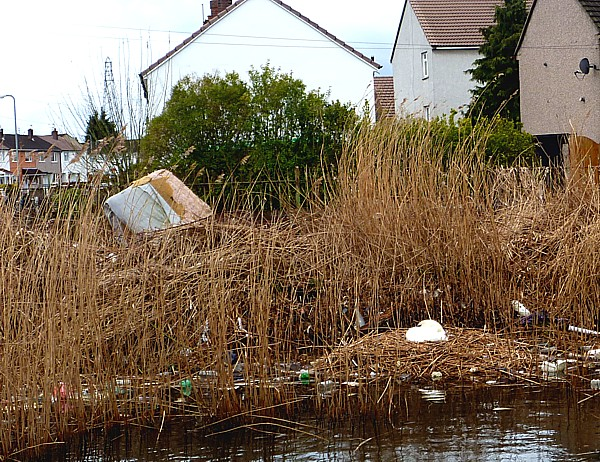15 Canal 2 Swan nest