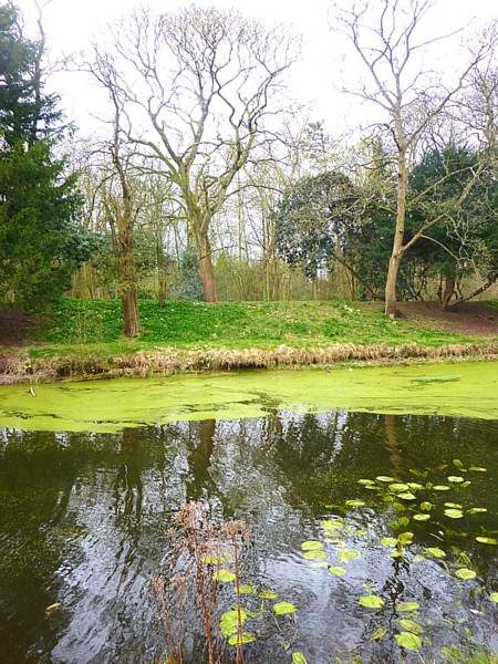 16 Croxteth lake and lilies