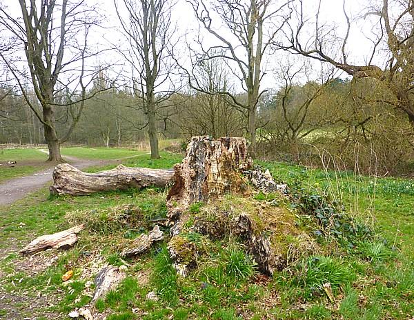 16 Croxteth stump
