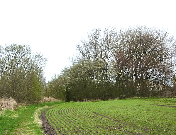 17 Lydiate cereal field