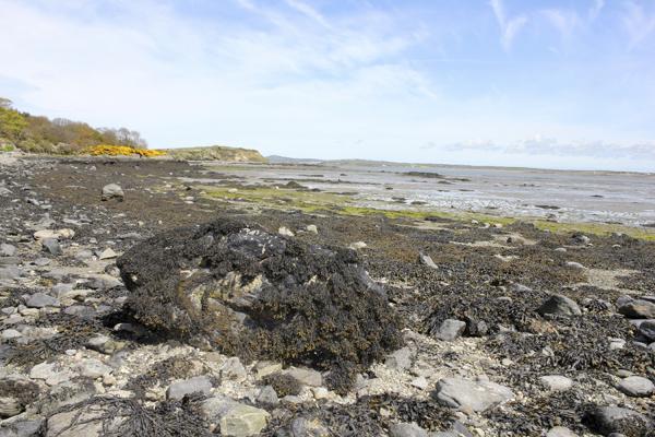 MNA Beddmanarch Bay Shoreline1