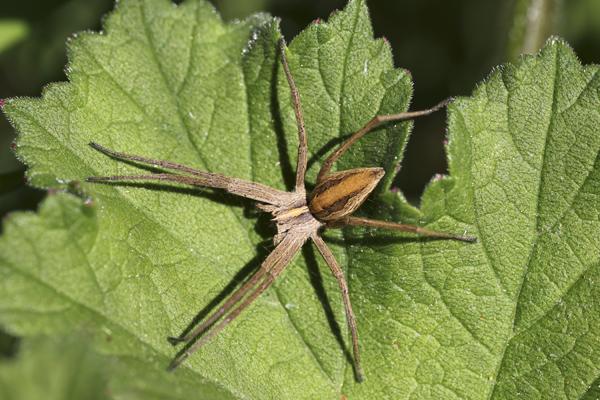 MNA Ness Gardens Spider2