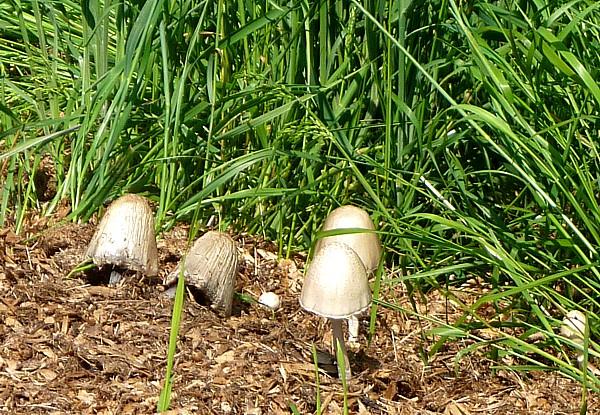 23 Neston fungi