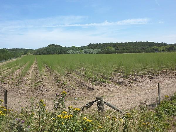 26 Freshfield asparagus fields