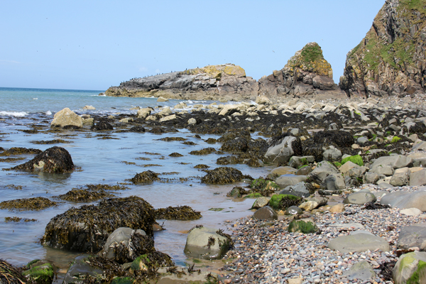 MNA Pistyll Bird Rock1
