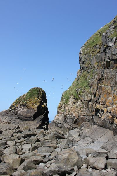 MNA Pistyll Bird Rock2