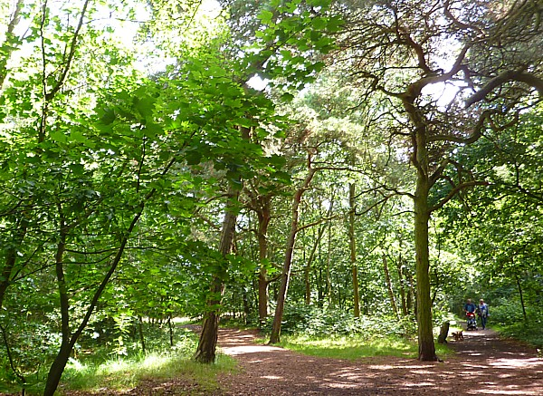 30 Bidston woods