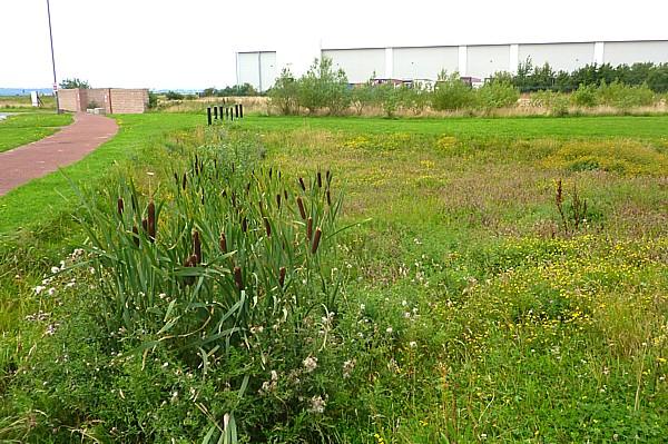 32 Speke wildflower gully