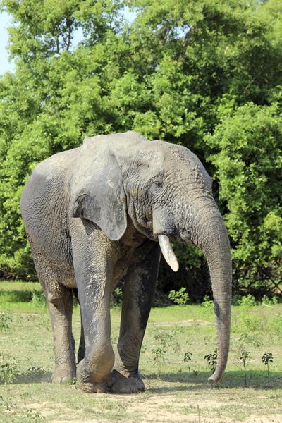 MNA Ghana Elephant1