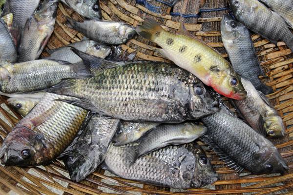 MNA Ghana Lake Fish1