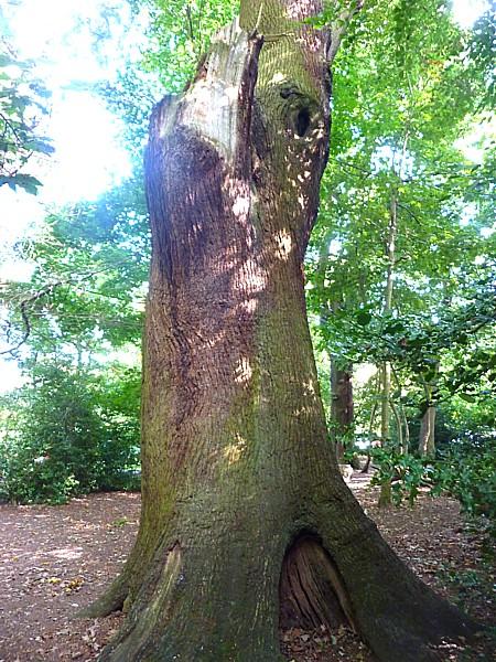 35 Eastham Great Oak
